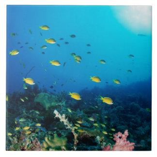 Large group of Ocellated Orange fish swimming Ceramic Tile