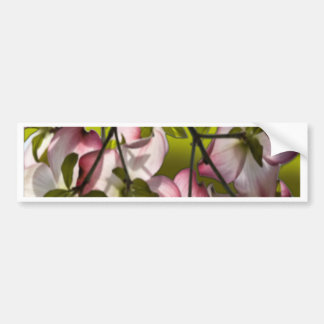 Large Pink Dogwood Flowers - Green Bumper Sticker