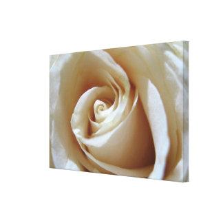 Large Soft White Wedding Rose Canvas Print