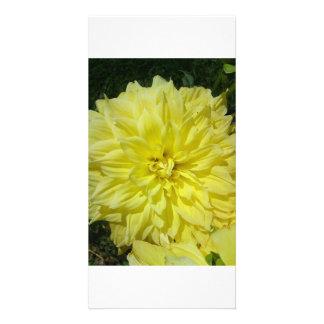 Large Yellow Dhalia Card