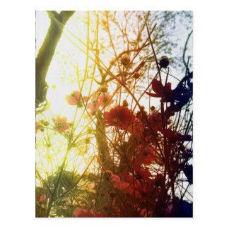 Last Autumn Postcard