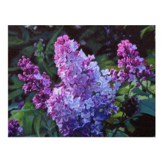 Lavendar Lilacs Postcard
