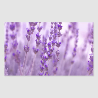 Lavender bliss rectangle stickers
