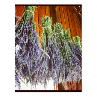 Lavender Drying in a Barn Postcard