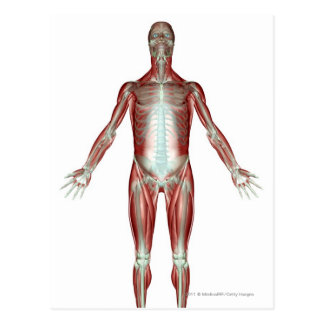 Layout of all the muscles in the human body postcard