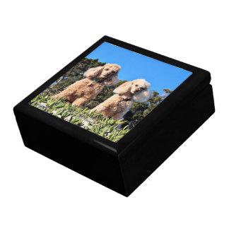 Leach - Poodles - Romeo Remy Gift Box