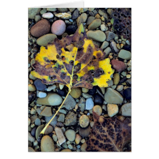 Leaf of Fremont cottonwood on flood plain 3 Card
