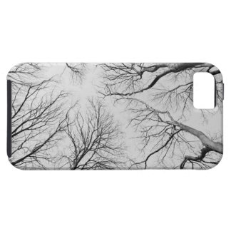 Leafless Trees in Thiepval Wood Case For The iPhone 5