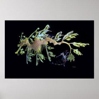 Leafy Sea Dragon Weedy Seadragon Print