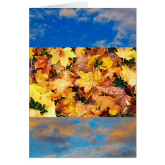 Leaves of Fall Card