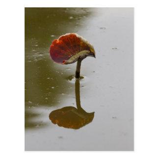 leaves of waterlily on lake postcard