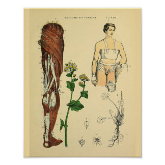 Leg Nerves Muscles Medical Anatomy Art Print