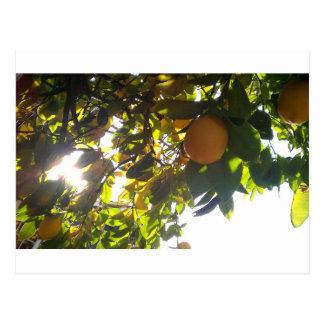 lemons sun postcards