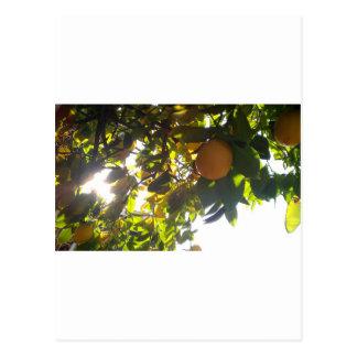 lemons sun post card
