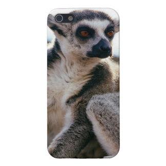 Lemur Portrait Closeup iPhone 5 Cover