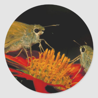 Leonard's skipper butterfly on Mexican sunflower Classic Round Sticker