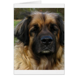 leonberger 2.png card