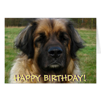 Leonberger dog birthday card