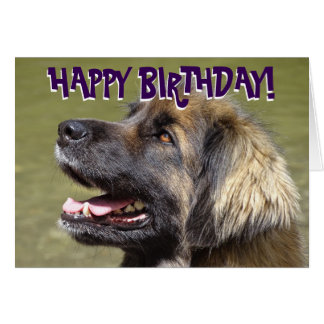 Leonberger dog birthday card