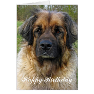Leonberger dog birthday card, beautiful photo card