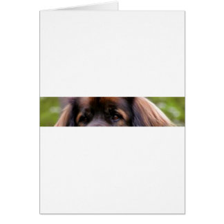 leonberger eyes card