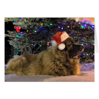 Leonberger Sparkly Christmas Card