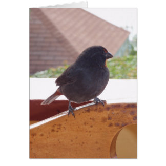 Lesser Antillean Bullfinch Card