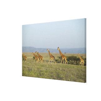 Lewa Wildlife Conservancy, Kenya Canvas Print