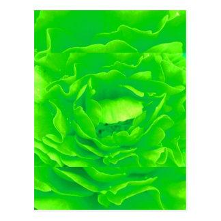 Light Green Rose Postcard I - Customizable Post Card