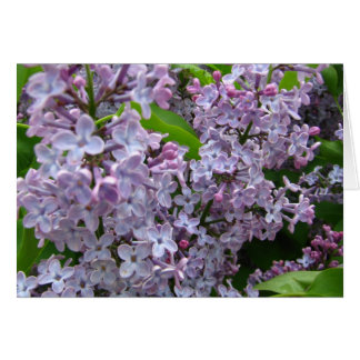Lilac Bunches Greeting Card