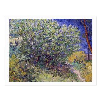 Lilac Bush by Vincent van Gogh Postcards