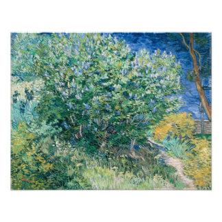 Lilac Bush Lilacs by Vincent Van Gogh Photographic Print