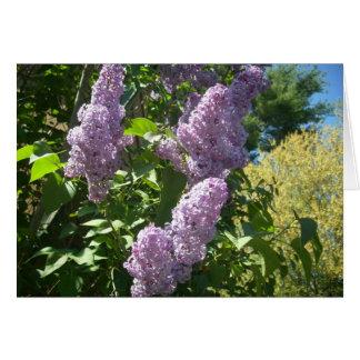 Lilac card