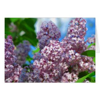 Lilac Card 1