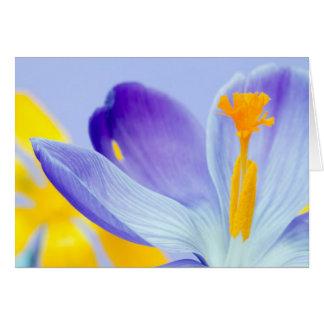 Lilac Crocus by Gillian Dernie Greeting Card