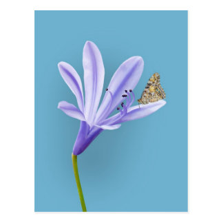 Lilac Day Lily Flower and Butterfly Postcard