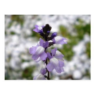 Lilac Dreams Postcard