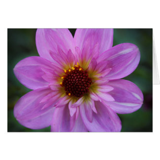 Lilac Flower Greeting Card
