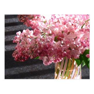 Lilac 'Maiden's Blush' Postcard