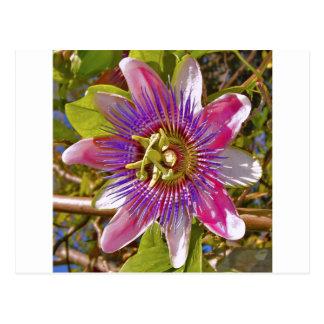 lilac passion flower postcard