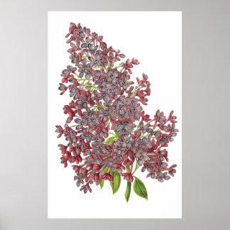 Lilac PREMIUM BOTANICAL PRINT