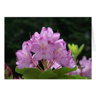 Lilac Rhododendron Greeting Card