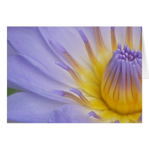 Lilac Waterlily Notecard Greeting Card