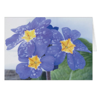 Lilac Winter Flowering Pansy Greeting Card