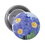 Lilac Winter Flowering Pansy Pin
