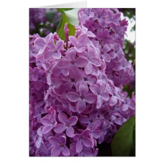 Lilacs 1 card