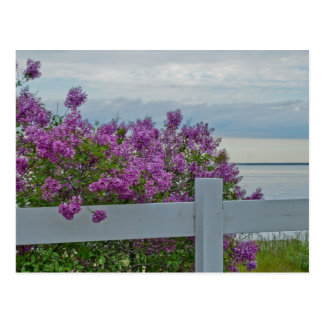 Lilacs by the Water Post Card