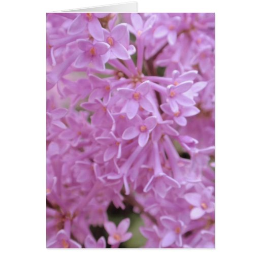 Lilacs Cards