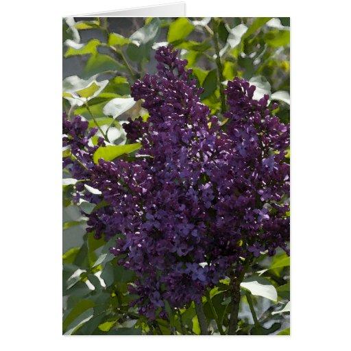Lilacs - Card