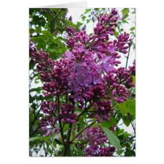 """Lilacs chez moi"" Note Card"